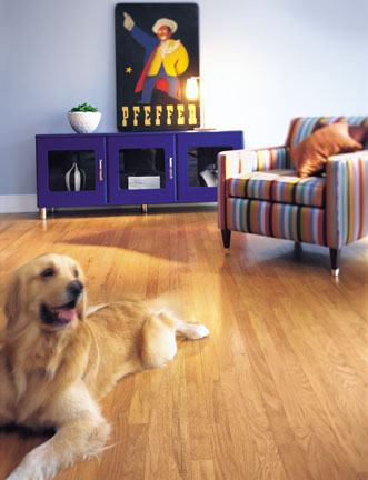 The Best Types Of Flooring For Your Furry Friends