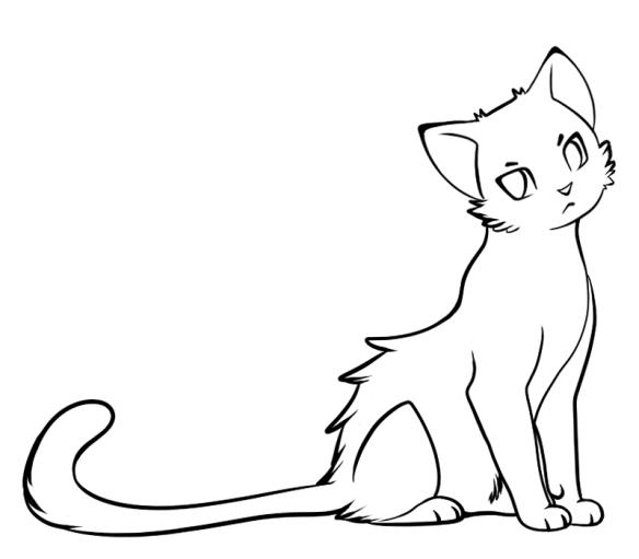 Cat-Image-Blog