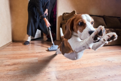 Dog-Hardwood-Floors-Scared